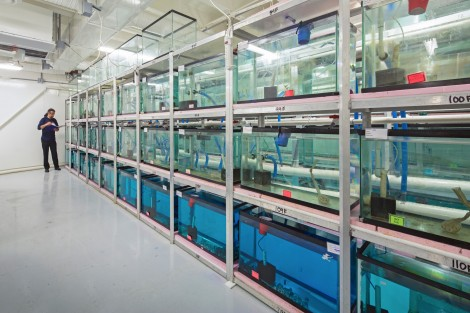 aquaculture research lab